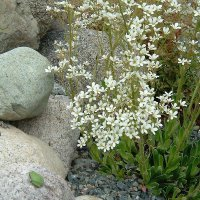 hbhorticulture-2about