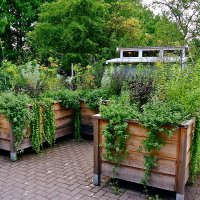 hbhorticulture-3services